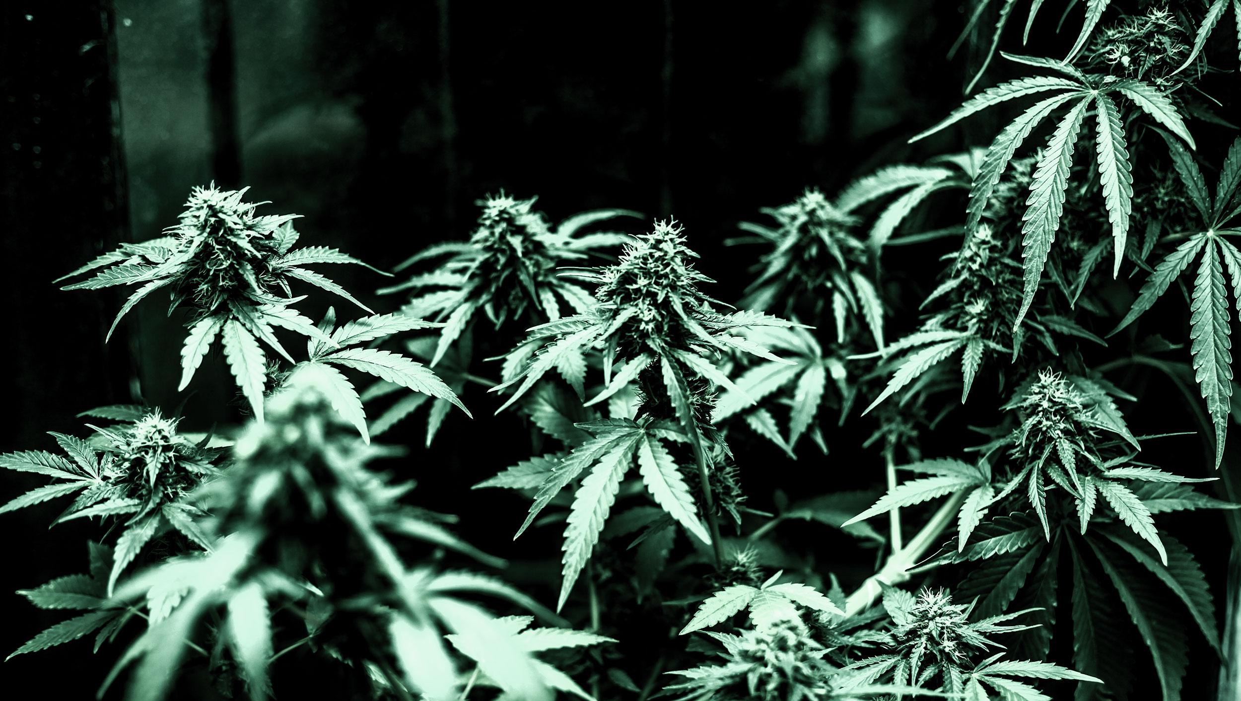 keine cannabis legalisierung
